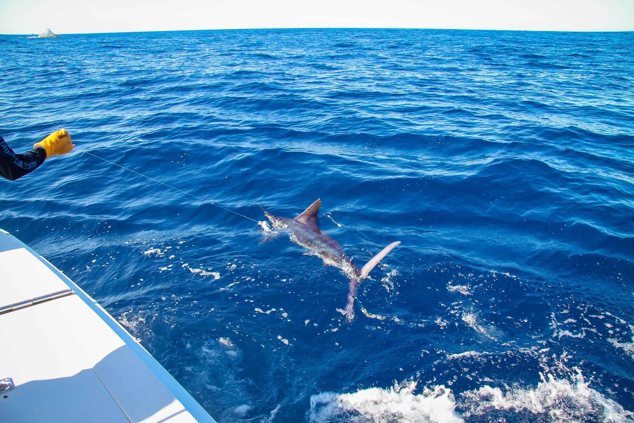cabomexicofishing