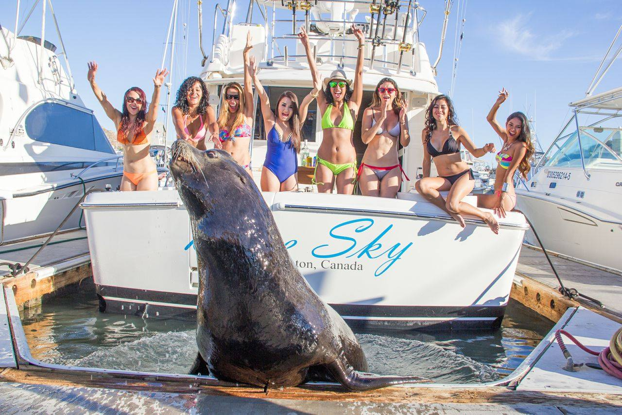 Testimonials cabo fishing in cabo for Fishing in cabo