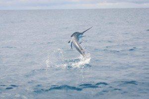 cabofish