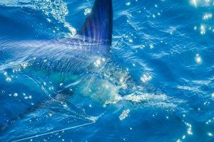 mexicofish